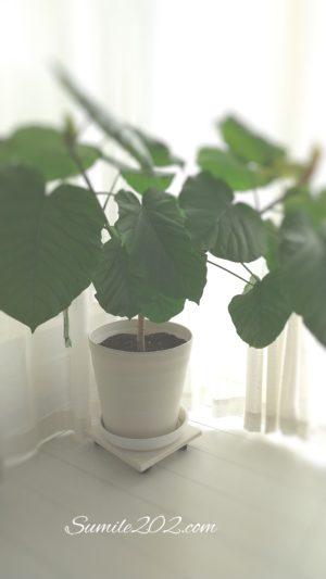 重い観葉植物のお世話を簡単にする 移動キャニスターを作ろう