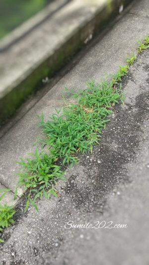 除湿剤の水を再利用 雑草駆除